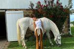 بيلا حديد فى أحدث صور لها من داخل مزرعتها مع الخيول