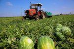 يديعوت أحرونوت:استخراج الوقود من البطيخ!