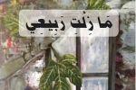 'مَا زِلْتِ رَبِيعِي' للشاعر نزيه نصرالله  عن دار الوسط اليوم