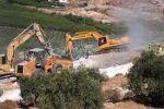 الاحتلال يسرق زيتون الخضر ويزرعه في