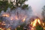 الدفاع المدني : إرتفاع في حرائق الأشجار خلال اليوم