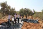 ضمن حملة احنا معكم  الاغاثة الزراعية تقدم الدعم والمساعدة لمزارعي القدس في جني ثمار زيتونهم