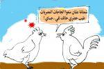 وقف استيراد الدجاجات المصريات-كرتون