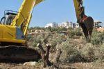 قوات الاحتلال تقتلع 350 شجرة زيتون ولوزيات جنوب الظاهرية