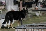 كلب يعيش بجوار قبر صاحبه منذ 6 سنوات