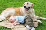 الكلب لم يكن صديق الإنسان في العصور الغابرة