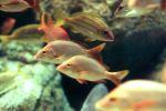 84 % من أسماك العالم تحتوي على