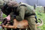 منظمة الصحفيين الأجانب تقدم شكوى ضد جنود الاحتلال