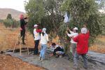 متطوعو حملة إحنا معكم يساعدون مزارعي بلدة المغير على قطف زيتونهم