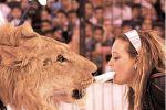برلمان كولومبيا يمنع استعمال الحيوانات في السيرك