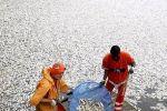 شاهد.. استعداد البرازيل للأولمبياد على حساب 65 طناً من الأسماك