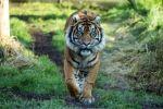 عاصم نمر سومطرة النادر يقتل شريكته في حديقة حيوان لندن في أول لقاء بينهما