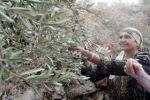 الاحتلال يخطر مواطنين من نحالين في بيت لحم بإخلاء أراضيهم الزراعية