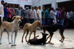 لحوم الكلاب: جماعات حقوق الحيوان تشيد بحظر بيعها في ولاية هندية