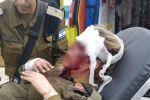 فيديو:اصابة جنديين اسرائيليين وخطف سلاح أحدهما بجنين..اسرائيل تقيم الدنيا وتتهم الفلسطينيينن بالانحطاط وتندد بمهاجمة جنودها في جنين