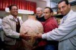 العثور على آنية فخارية استخدمت في تخمير الشعير قبل 5000 عام في تل أبيب