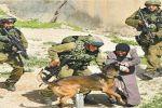 هولندا تستمر بتصدير كلاب بوليسية لإسرائيل تستخدم كأسلحة ضدّ الفلسطينيين