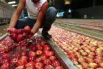 تقرير: الخضار والفاكهة الإسرائيلية الملوثة بالمبيدات المحظورة تغرق الأسواق المحلية