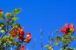 هل تسمعك النباتات حين تغني لها؟