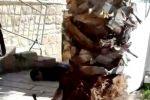 فيديو:استشهاد شاب وإصابة آخر قرب الحرم الإبراهيمي في الخليل