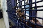 نادي الأسير: التقرير الإسرائيلي حول واقع السجون يكشف كذب وزيف ادعاءات حكومة الاحتلال في التعامل مع الأسرى الفلسطينيين