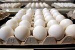 اتحاد المزارعين يطالب بوقف الانخفاض الكبير في سعر البيض
