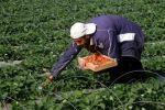 حول الإهتمام بالزراعة المنزلية والحقلية.... نايف عبوشل