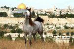الحصان الفلسطيني وحيداً ....تميم منصور
