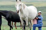 كازاخستان تستبدل النفط بحليب الخيل