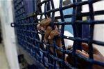 أربعة أسرى يواصلون الإضراب المفتوح عن الطعام في سجون الاحتلال