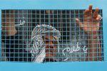 هيئة الأسرى: إدارة سجن عسقلان تبدأ تدريجيا بتنفيذ مطالب الأسرى