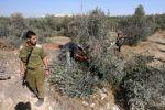 مستوطنون يقطعون 60 شجرة زيتون جنوب نابلس
