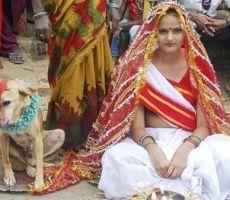 بالفيديو:هندية تتزوج بكلب لفك النحس