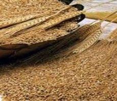 إيران تشتري 600 ألف طن من القمح