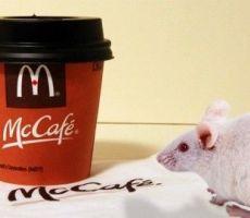 شا ب يعثر على فأر ميت في كأس القهوة من مطعم