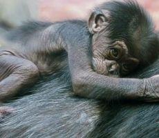 دعوة لمنح الحيوانات نفس حقوق الإنسان