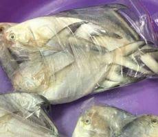 النيابة الكويتية تحقق في قضية 'المسامير داخل الأسماك'
