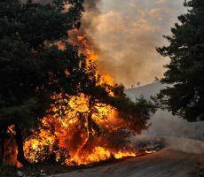 الجزائر تتهم مجموعة تقول إن لها صلات بالمغرب وإسرائيل بإشعال حرائق غابات