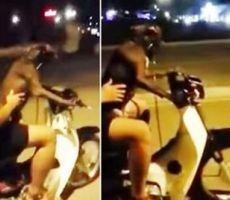 بالفيديو..كلب يقود دراجة بمفرده