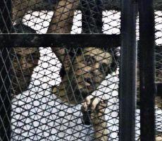 بيان من المرصد العربي لحرية الإعلام