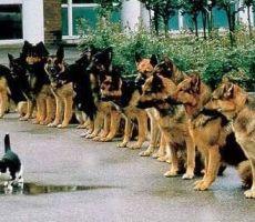 مدينة تمنح الكلاب والقطط حقوق مواطنيها