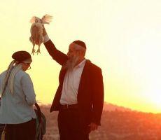 جدل في اسرائيل حوله :ما هو تقليد 'الكفارة ..الكاباروت' اليهودي؟