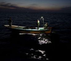 غزة: تحذيرات من بيع وتناول سمكة (الأرنب السامة)