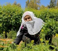 دراسة: 65% من الأردنيات مقترضات