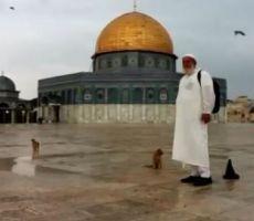 حاج فلسطيني: جميع قطط الأقصى تعرفني - فيديو