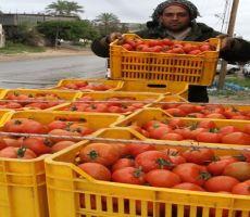 'المجنونة' ترتفع في غزة