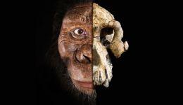 أصل الإنسان: جمجمة عمرها نحو 4 ملايين سنة تتحدى النظرية السائدة