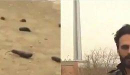 إيران تكشف حقيقة 'مزحة أمطار الباذنجان'