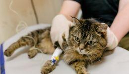 لأول مرة في روسيا.. تأكيد إصابة قطة بفيروس كورونا