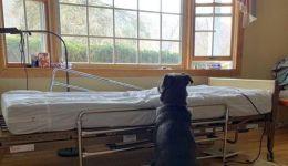 شاهد: 'أوفى الأصدقاء'.. كلب ينتظر صاحبة المتوفى بإصرار!